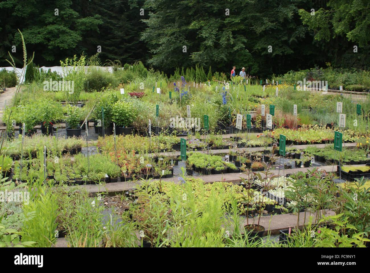 Herb nursery - Stock Image