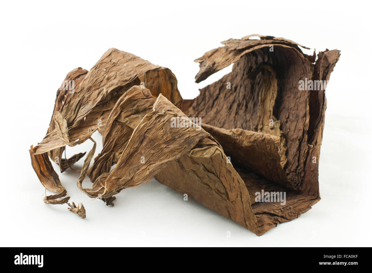Dried tobacco leaves - Stock Image