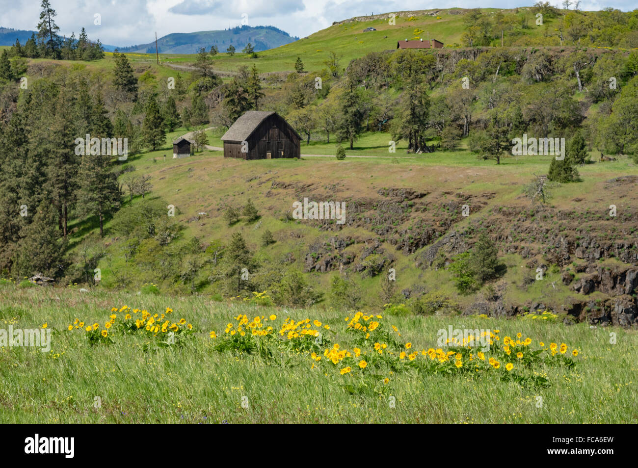 A small wooden barn on a farm and prairie in the Columbia Gorge. Columbia  Gorge