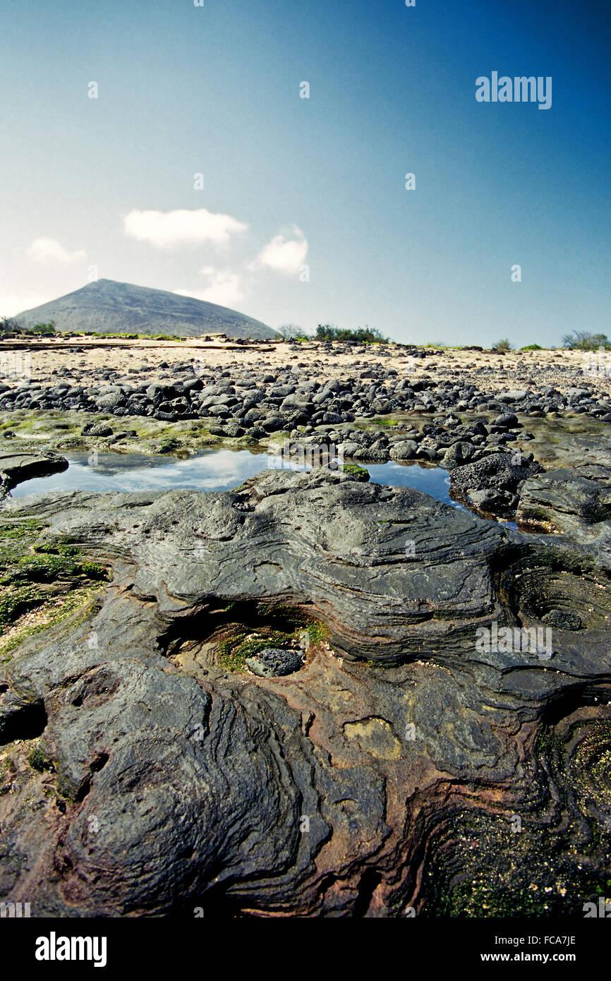 Lava Terraces, Santiago/Galapagos - Stock Image