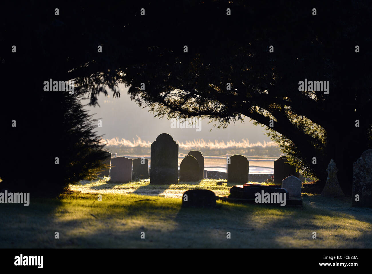 Early morning graveyard UK - Stock Image