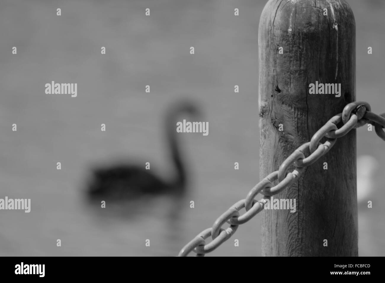 Detail Shot Of Rope Fence Against Blurred Background - Stock Image