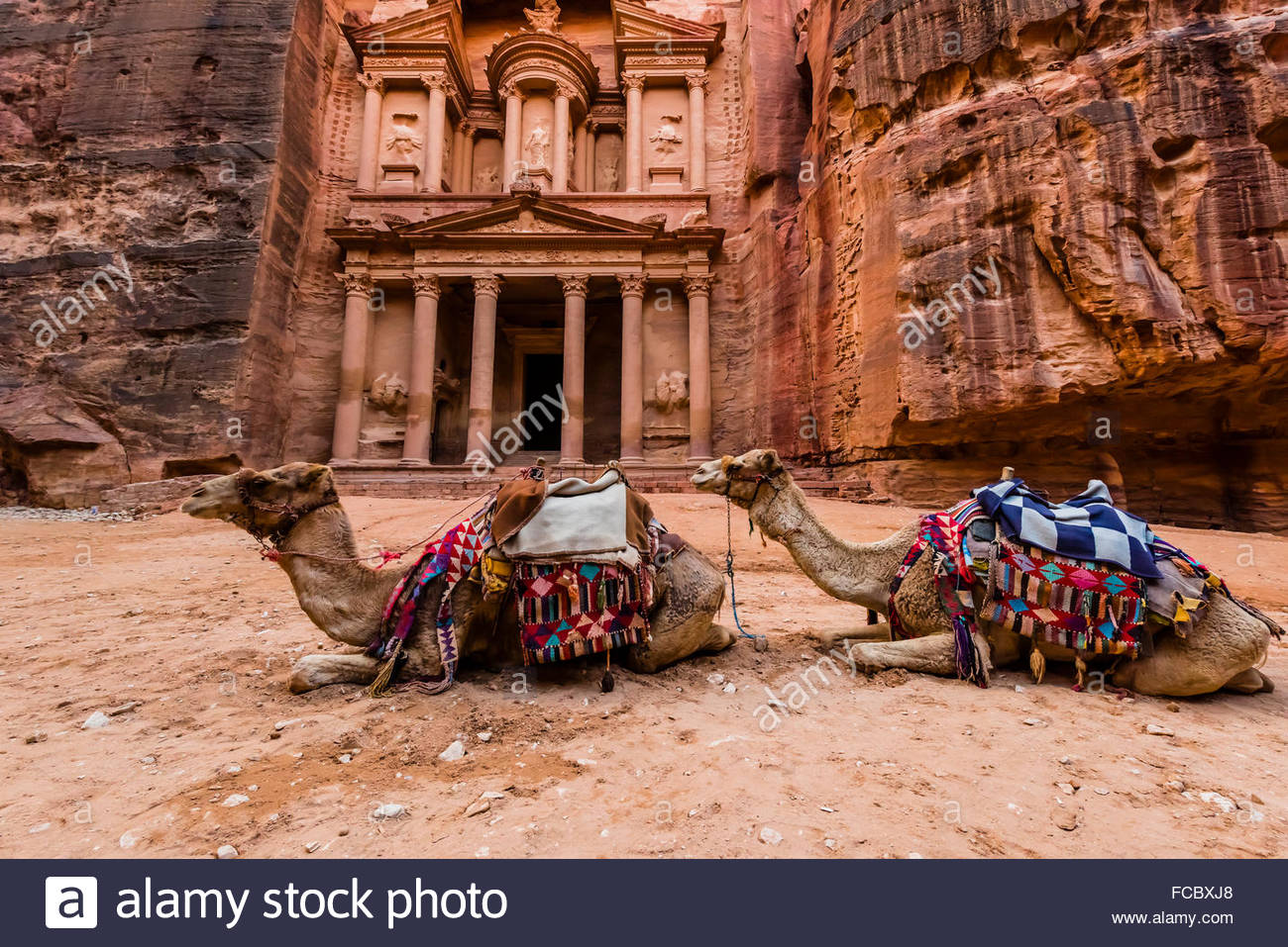 Camels in front of The Treasury (Al-Khazneh), Petra Archaeological Park (a UNESCO World Heritage Site), Petra, Jordan. - Stock Image
