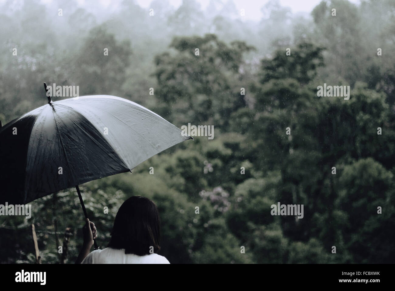 Rear View Of Woman With Umbrella With Trees In Background - Stock Image