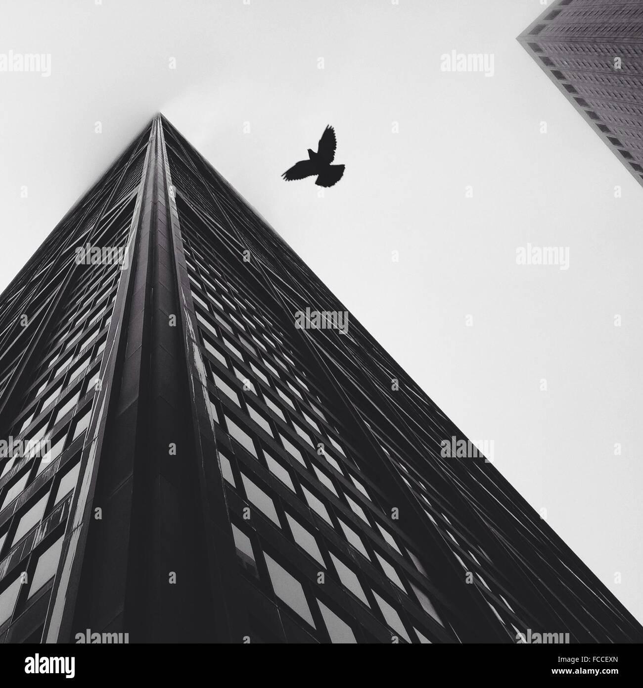 Directly Below Shot Of Bird Flying By Skyscraper Against Clear Sky - Stock Image