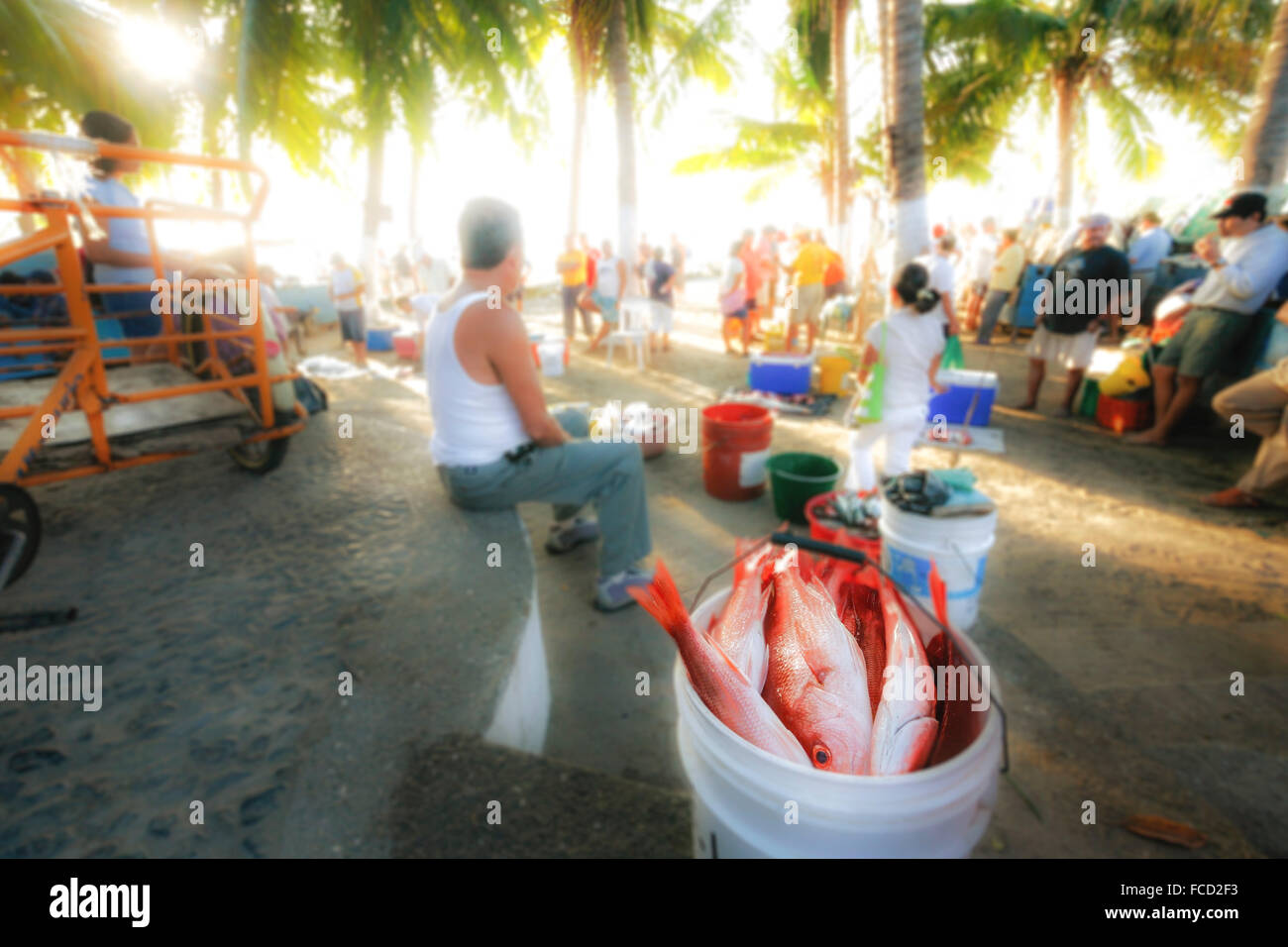 Surreal take on red snapper in a bucket at the open air fish market in Zihuatanejo, Guerrero, Mexico. Stock Photo