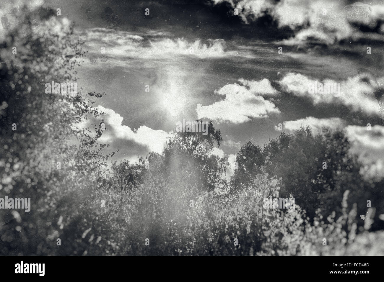 Sunshine, Clouds And Trees In Summer - Stock Image