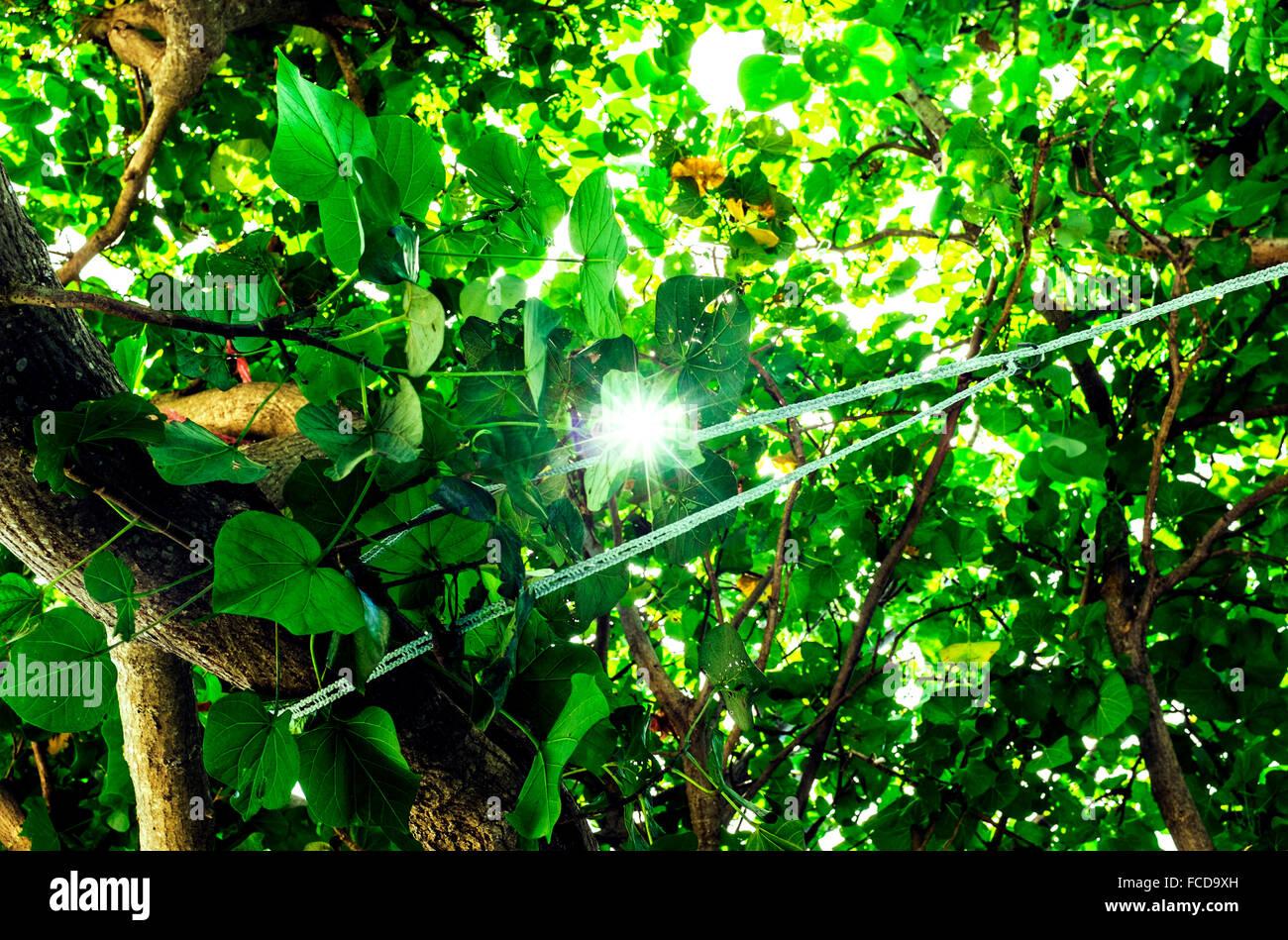 Sun Flaring Through Leaves - Stock Image