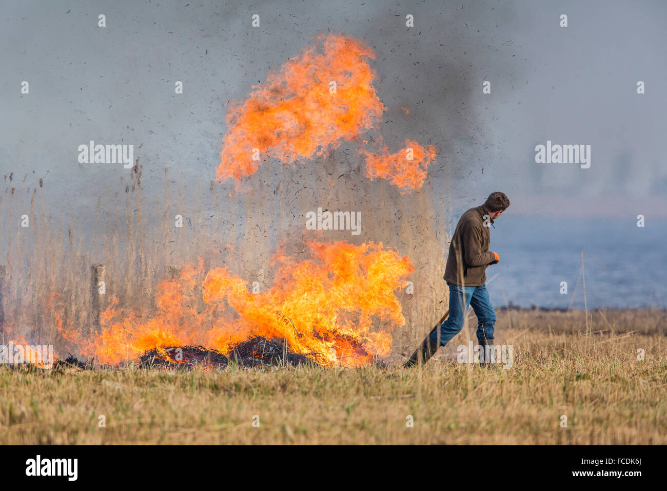 Netherlands, Akersloot, Hempolder Nature Reserve. Wetland. Breeding ground for waterfowl. Burning of dry reed supervisors. - Stock Image