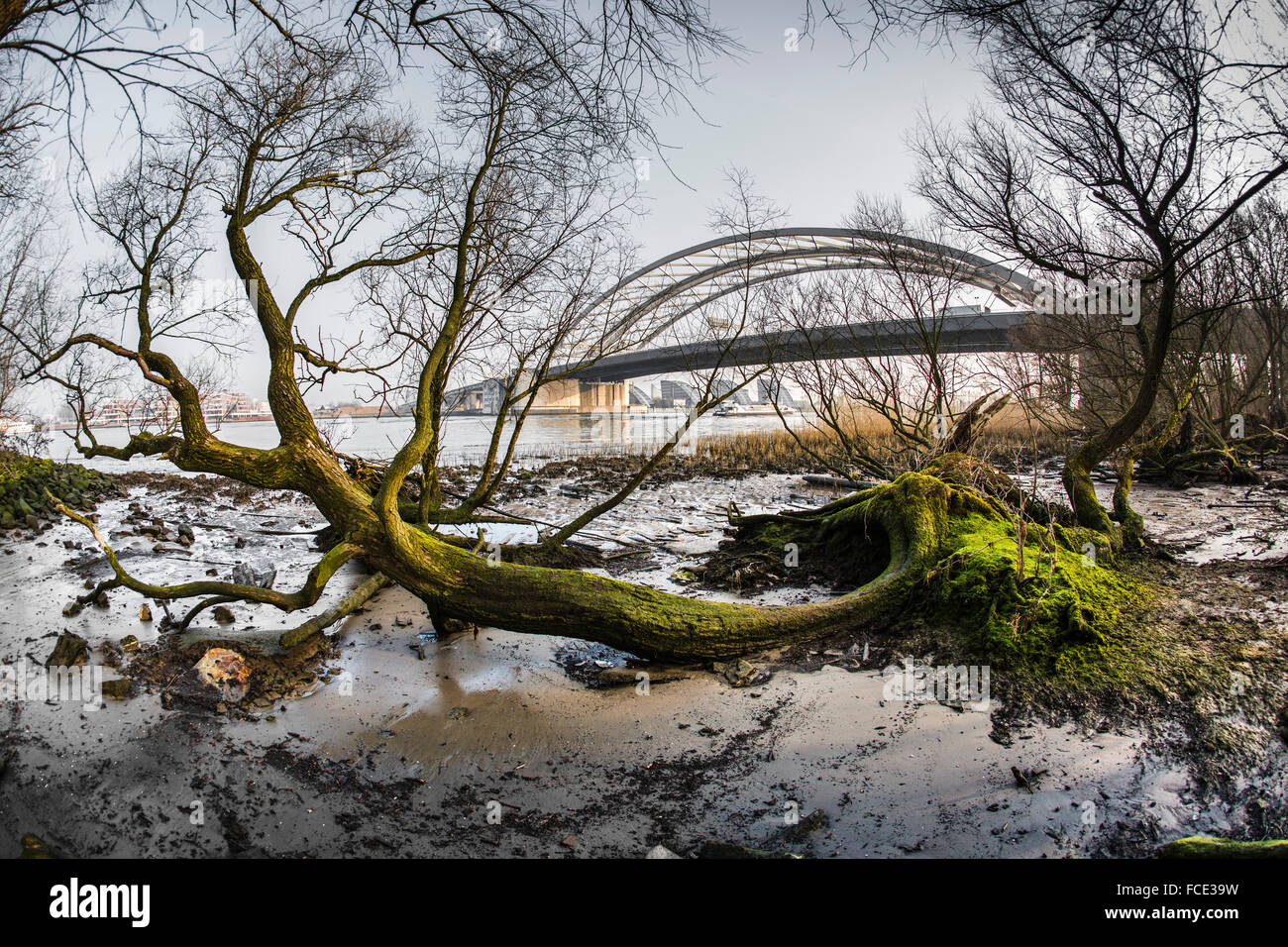 Netherlands, Rotterdam, Nature reserve called Eiland van Brienenoord near the Van Brienenoord bridge - Stock Image