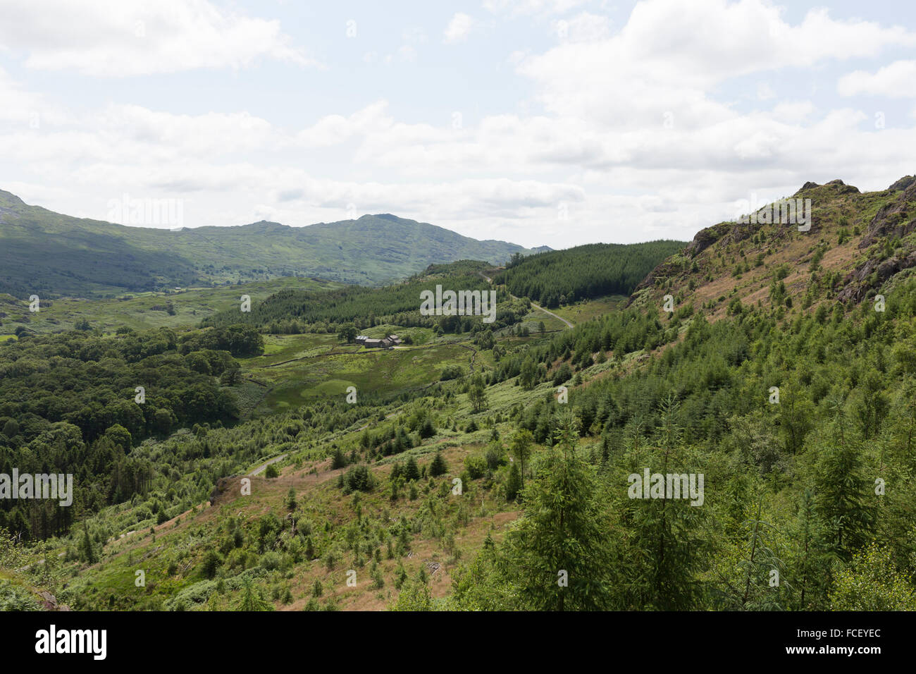 Forestry plantation in Dunnerdale, Lake District - Stock Image