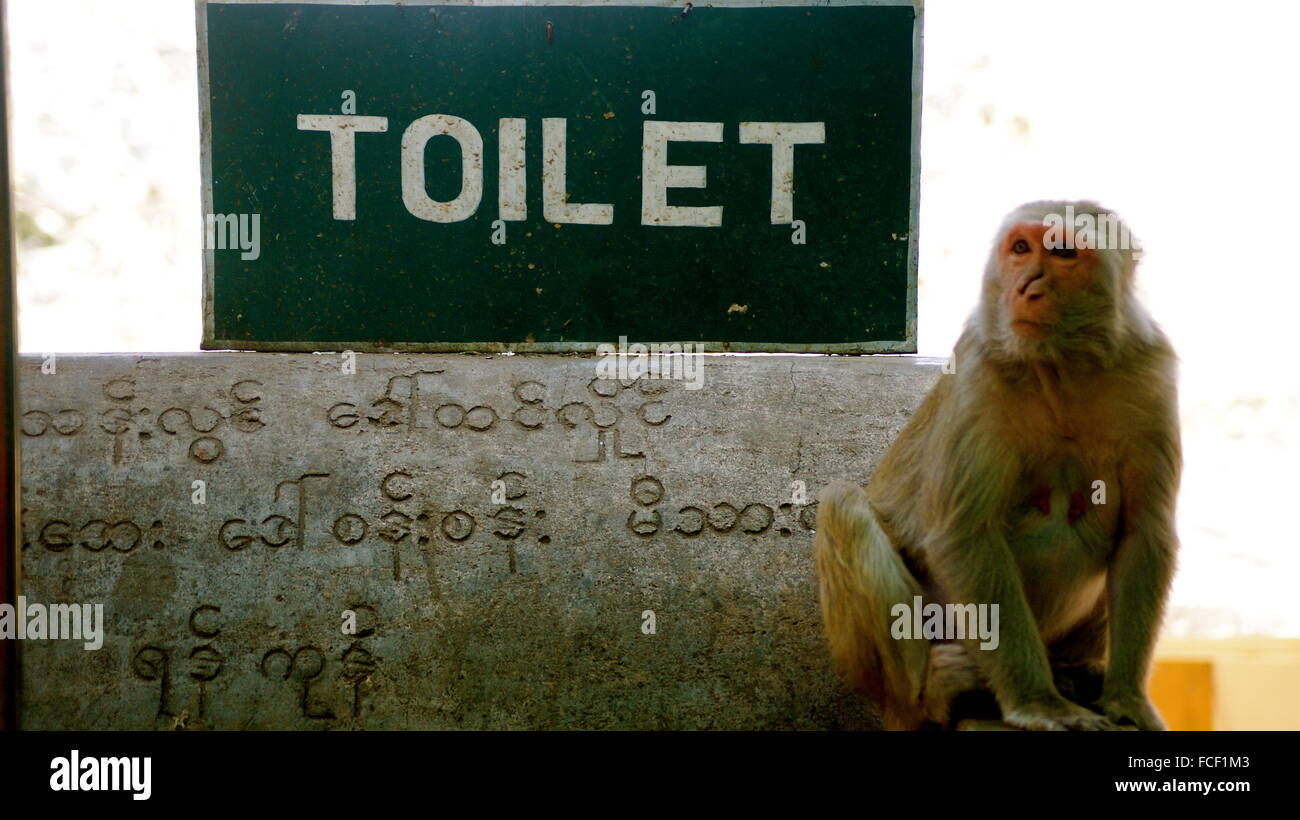 Monkey In Front Of Toilet Sign - Stock Image