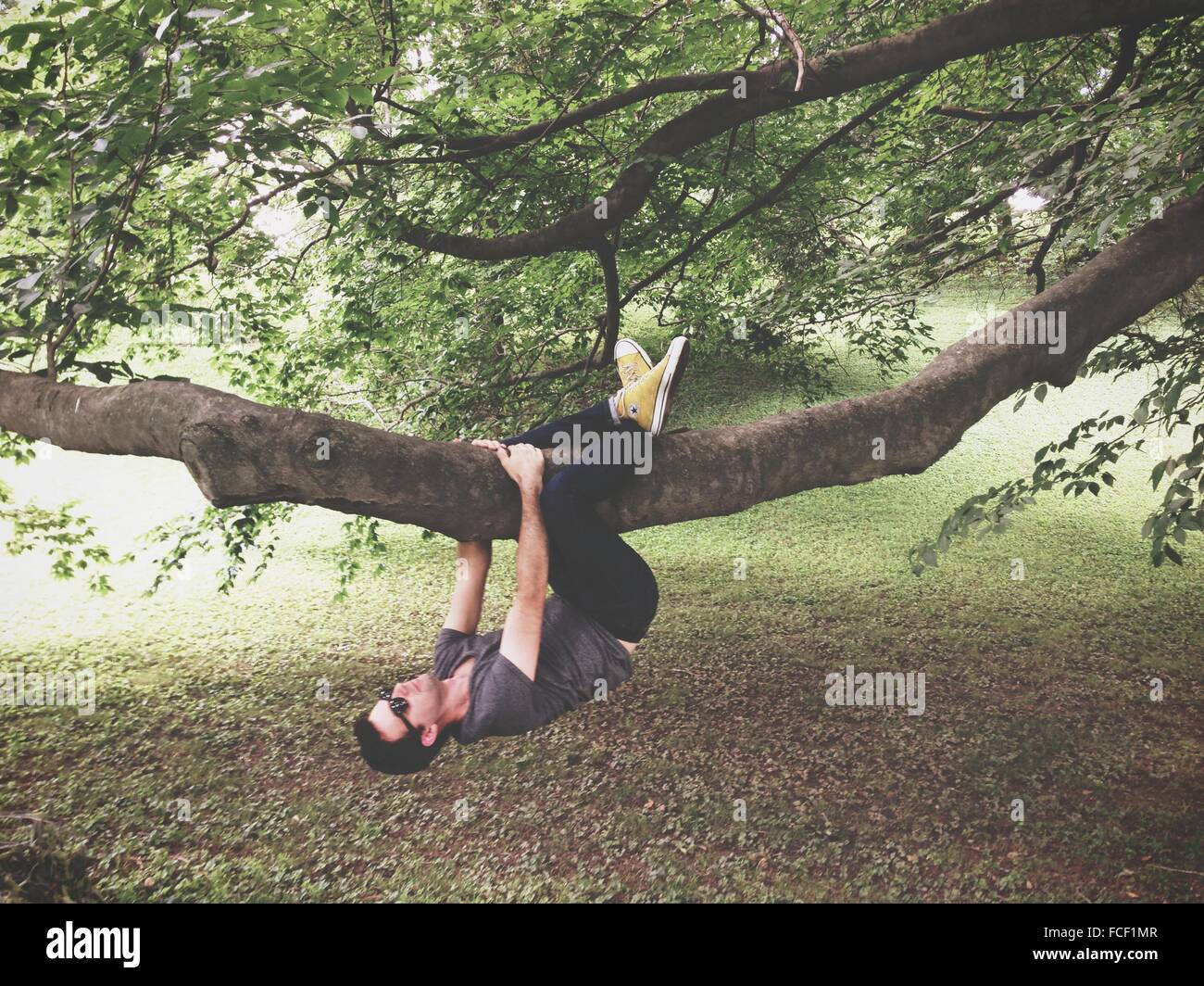 Man Climbing Tree - Stock Image