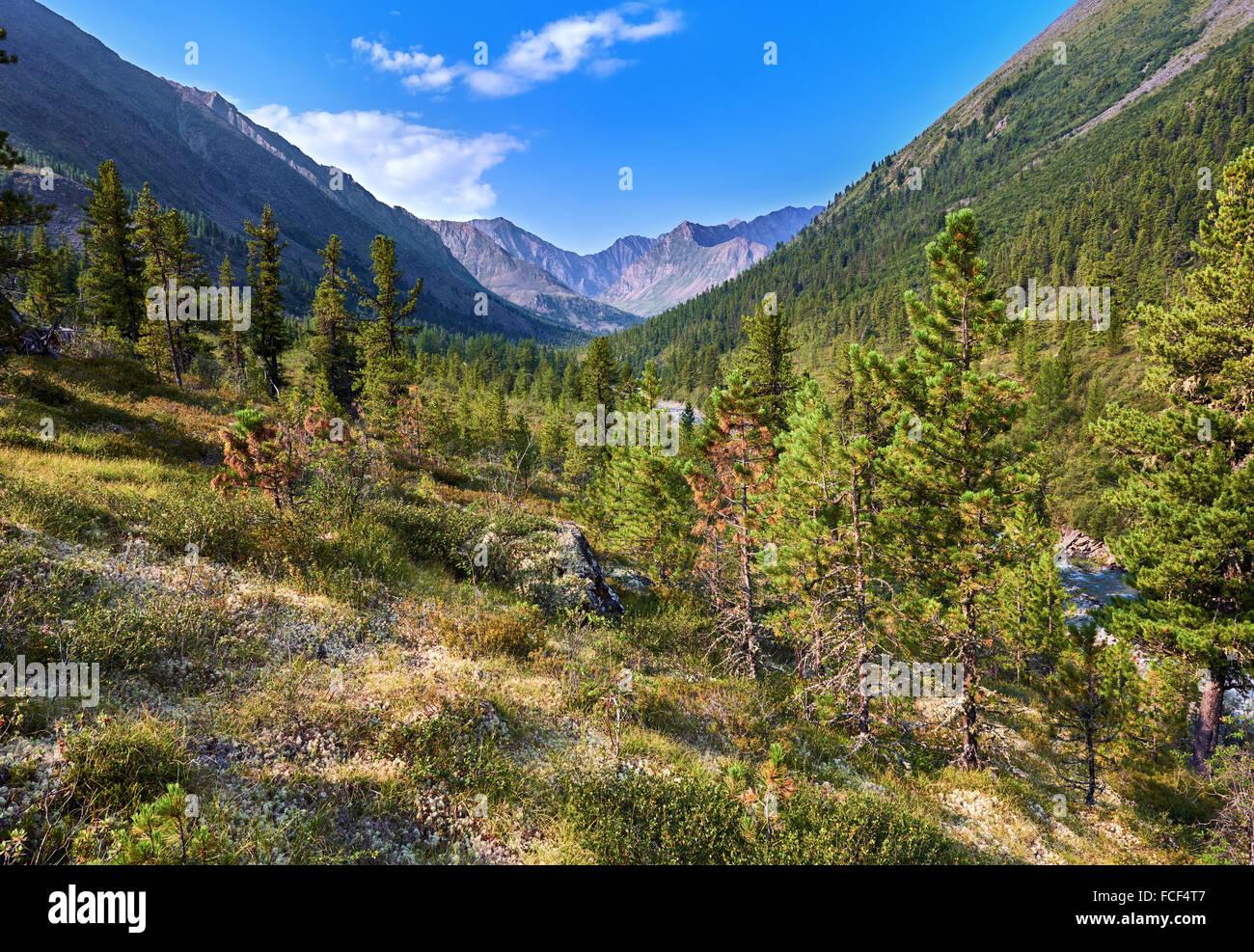 Siberian mountain woodlands summer morning . Eastern Sayan . Buryatia - Stock Image