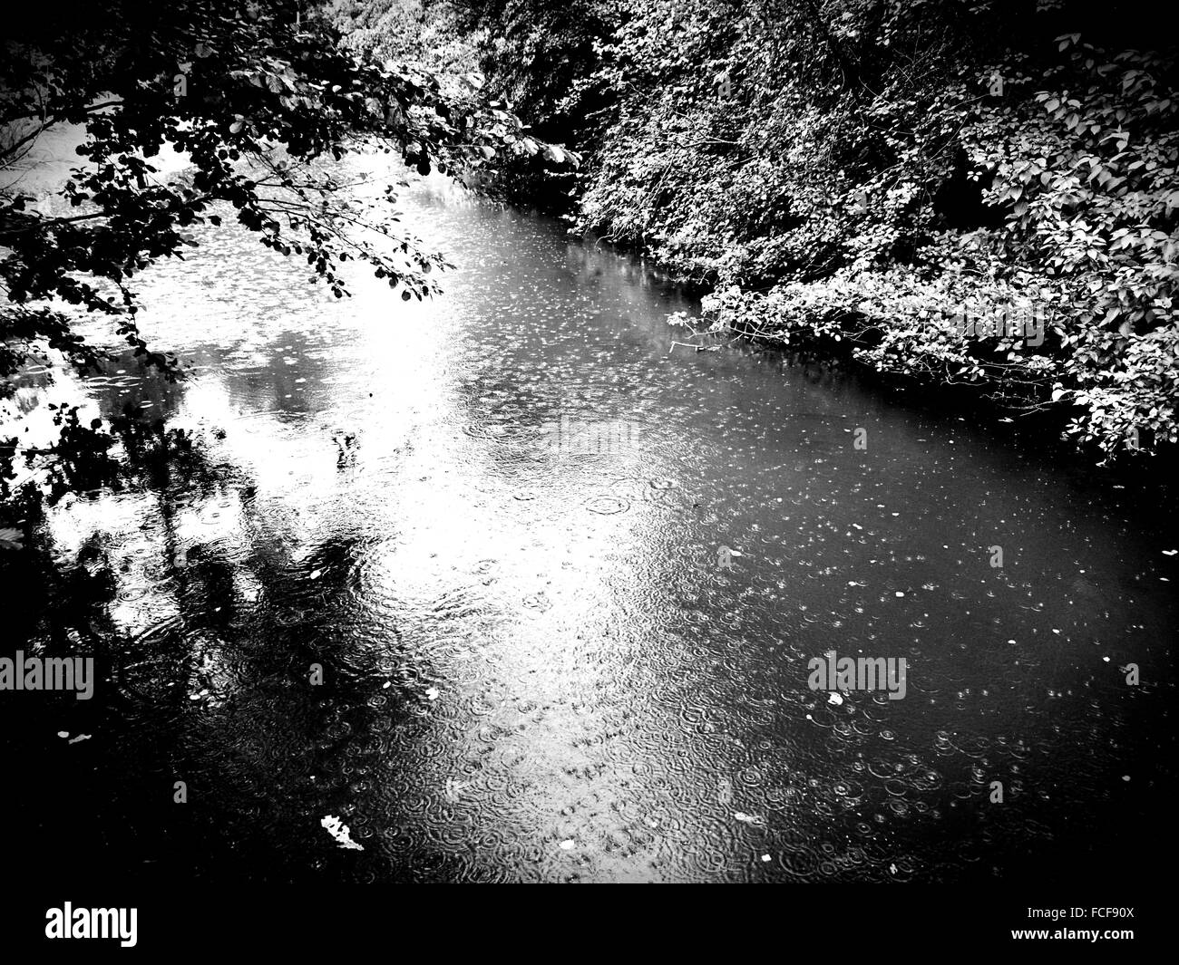 Stream By Plants In Forest During Monsoon - Stock Image