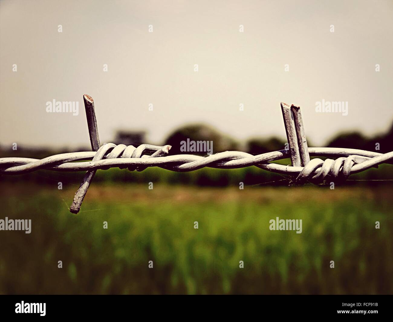 Close-Up Of Barbed Wire Against Field - Stock Image