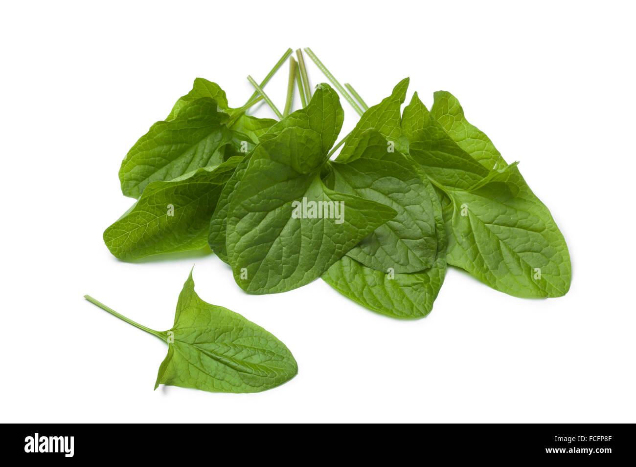 Fresh green Good-King-Henry vegetable leaves on white background - Stock Image