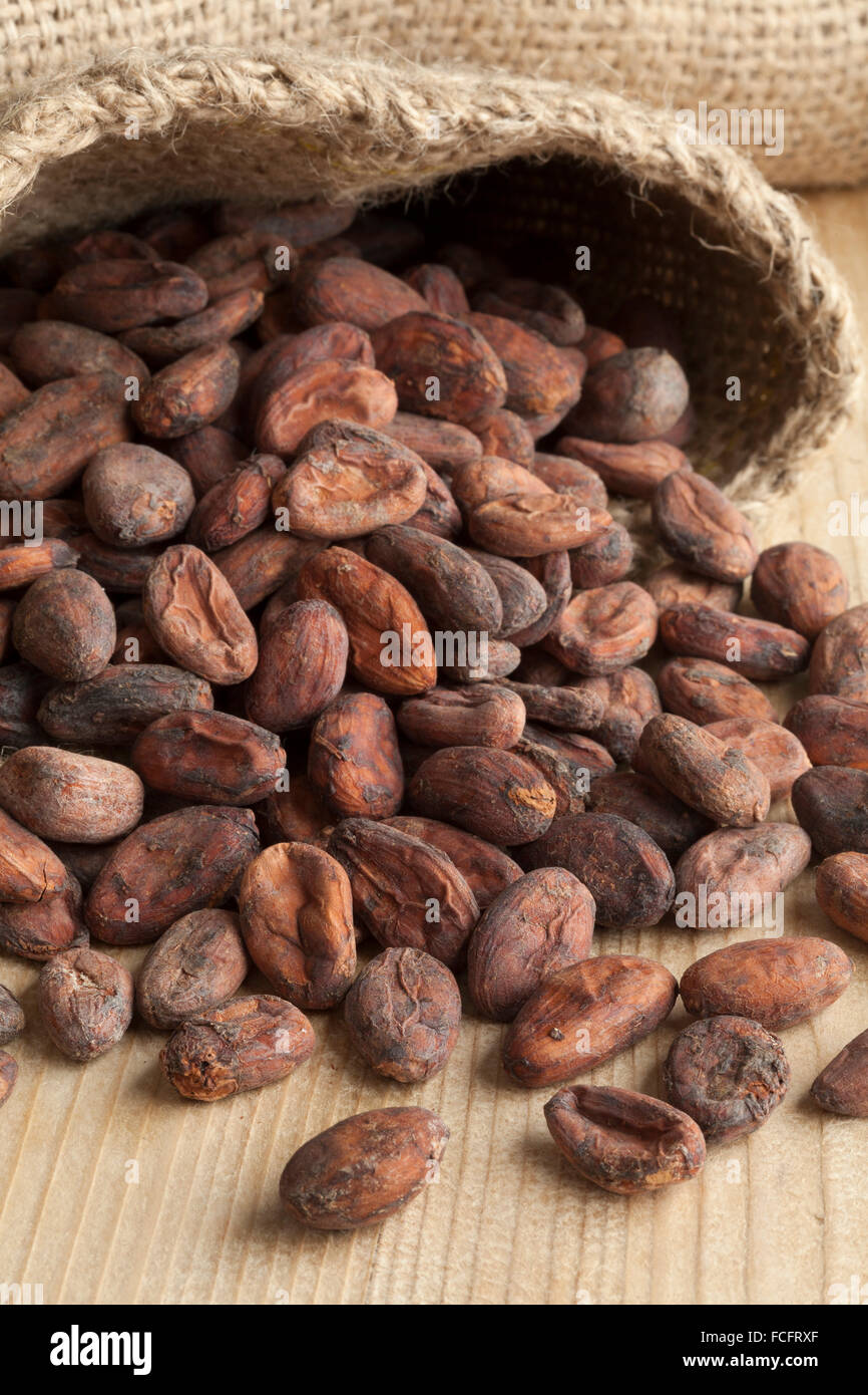 Jute bag full with raw cocoa beans - Stock Image