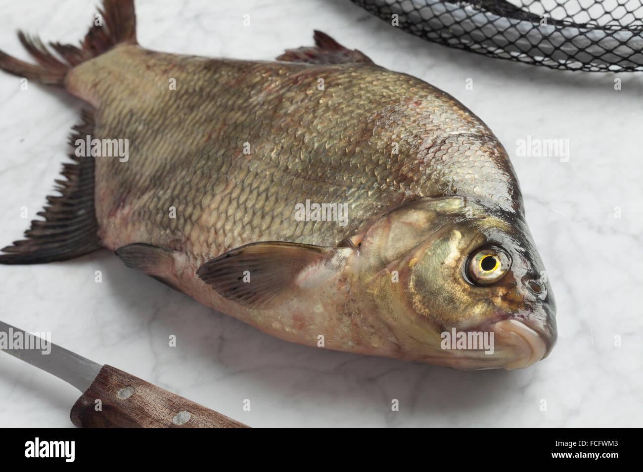 Fresh caught common bream - Stock Image