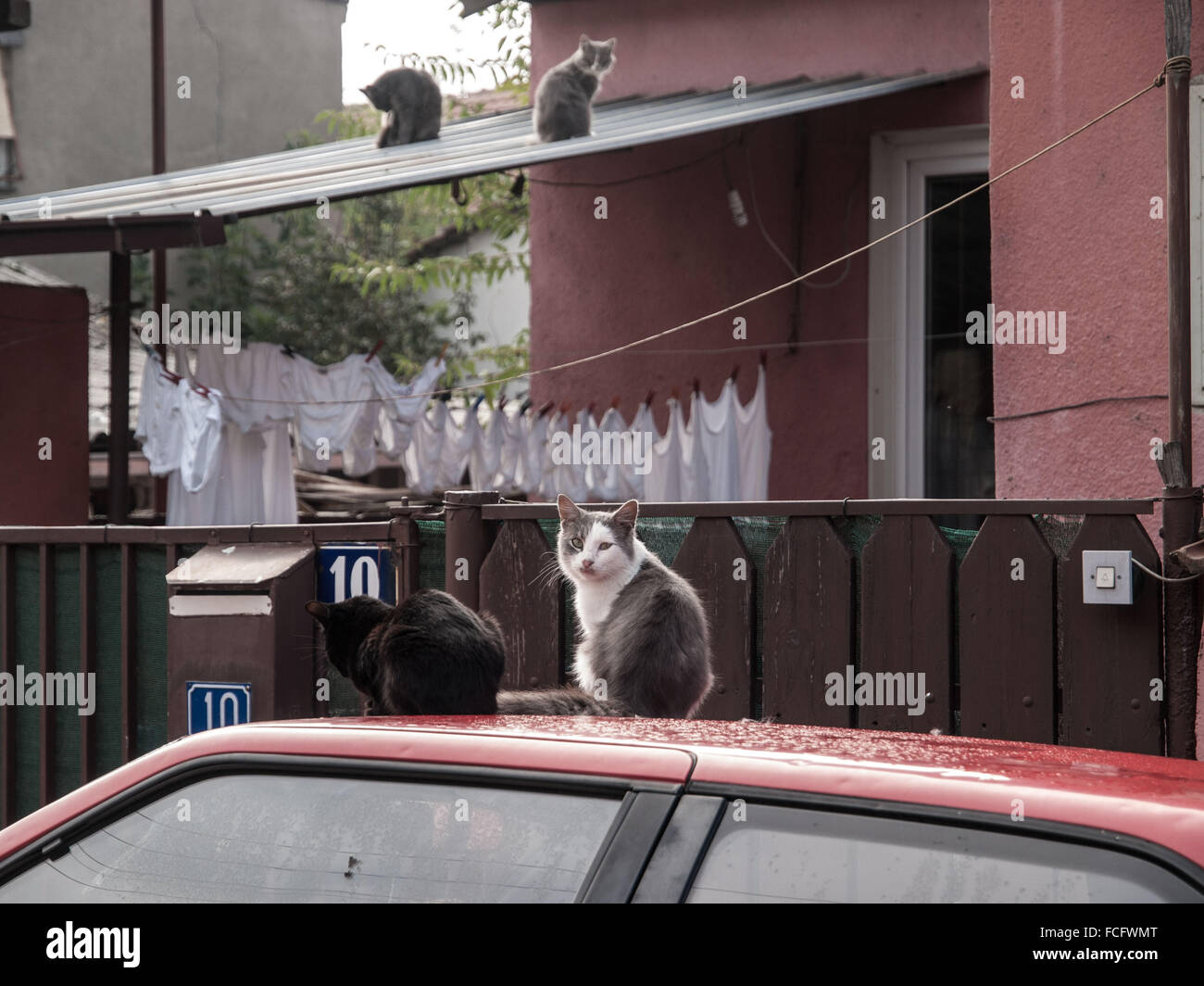 Four stray cats on roof of car and house in Skopje, Macedonia, Europe. - Stock Image