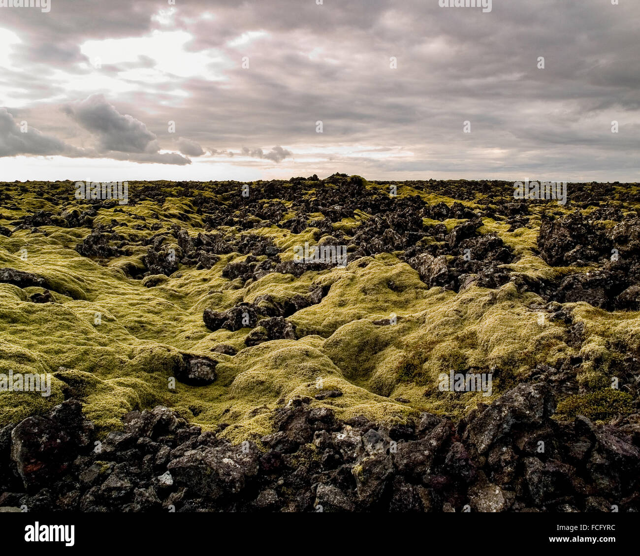 Green moss covering black lava rock in a large field just outside of the Blue Lagoon Spa near Keflavik in Iceland. Stock Photo