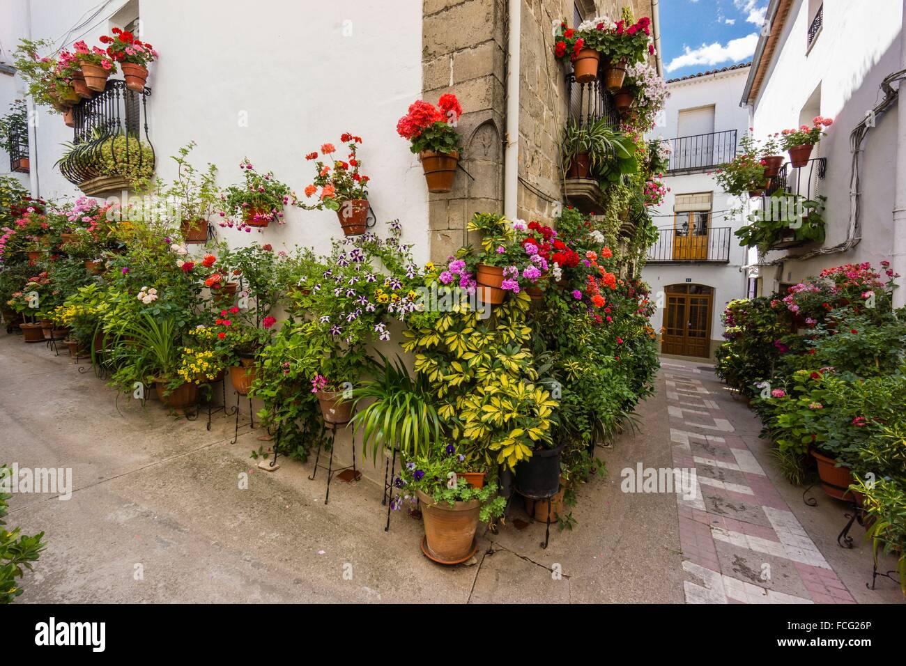 macetas de flores en la calle, Iznatoraf, Loma de Ubeda, provincia de Jaén en la comarca de las Villas, spain, europe. Stock Photo
