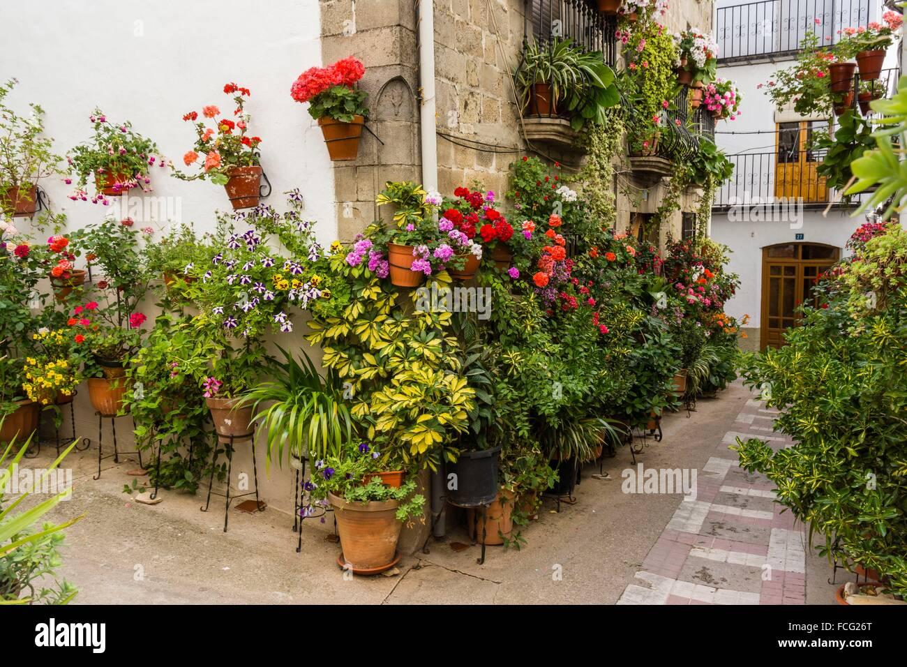macetas de flores en la calle Iznatoraf Loma de Ubeda provincia