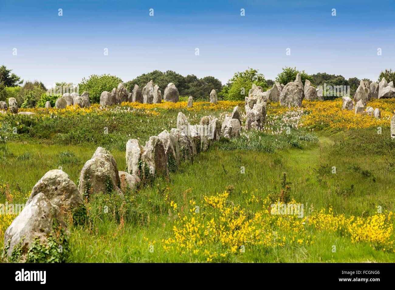 Kermario alignment, dolmen, megalithic site of Carnac, Morbihan, French Brittany, France, Europe - Stock Image