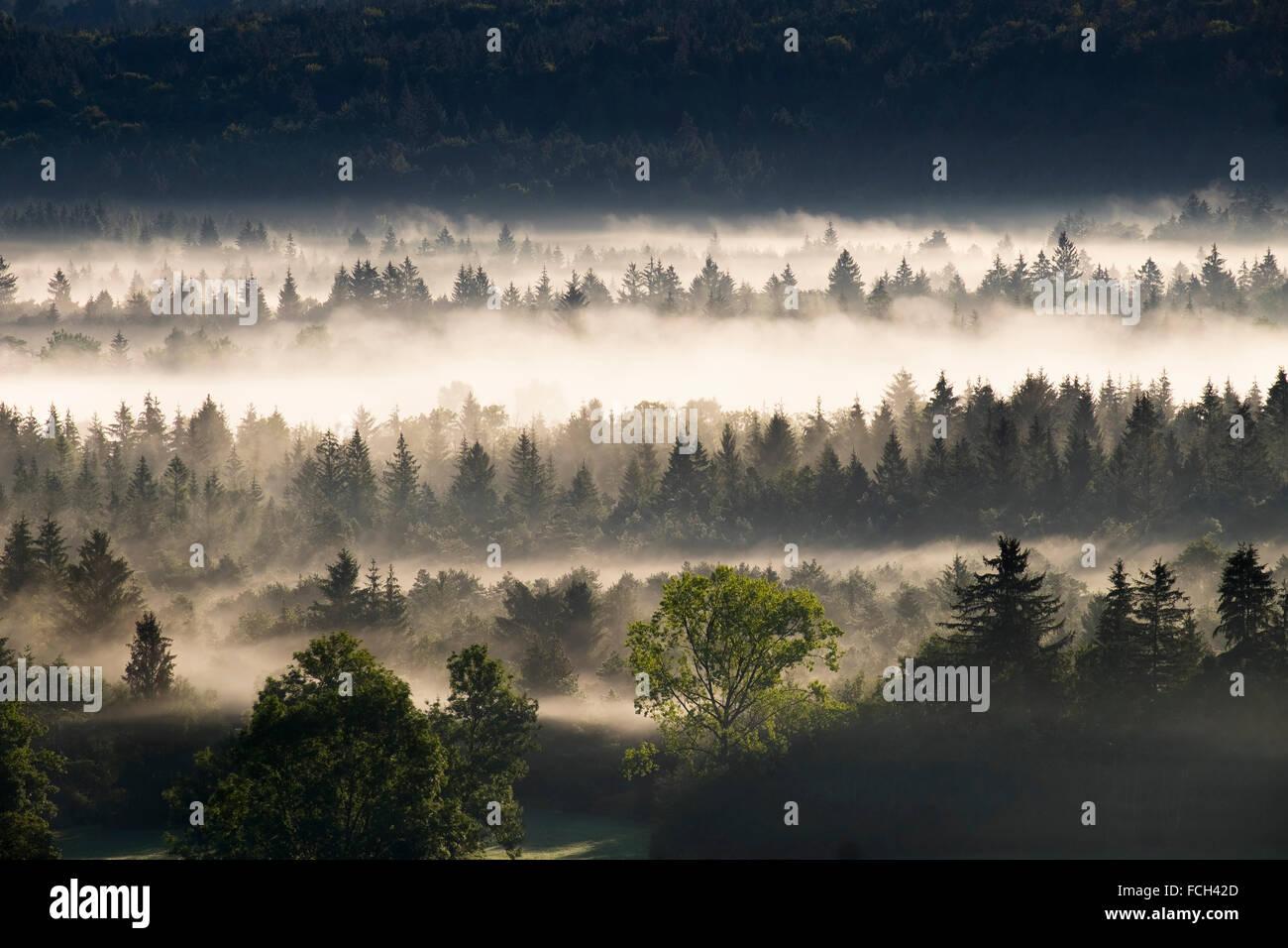 Germany Bavaria Pupplinger Au morning mist at Isar floodplains - Stock Image
