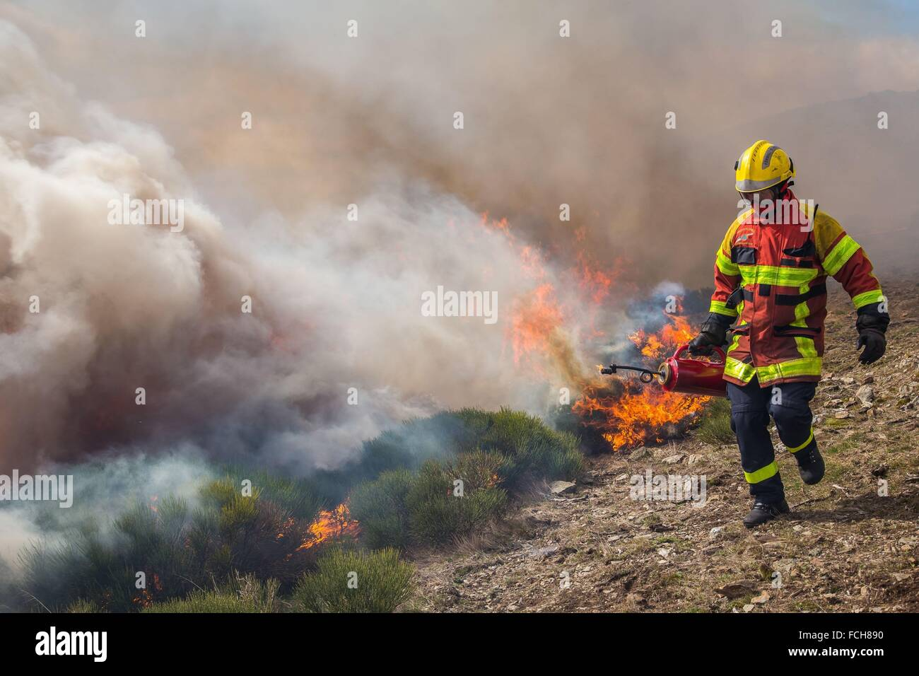 TACTICAL FIRE, FIREFIGHTERS - Stock Image