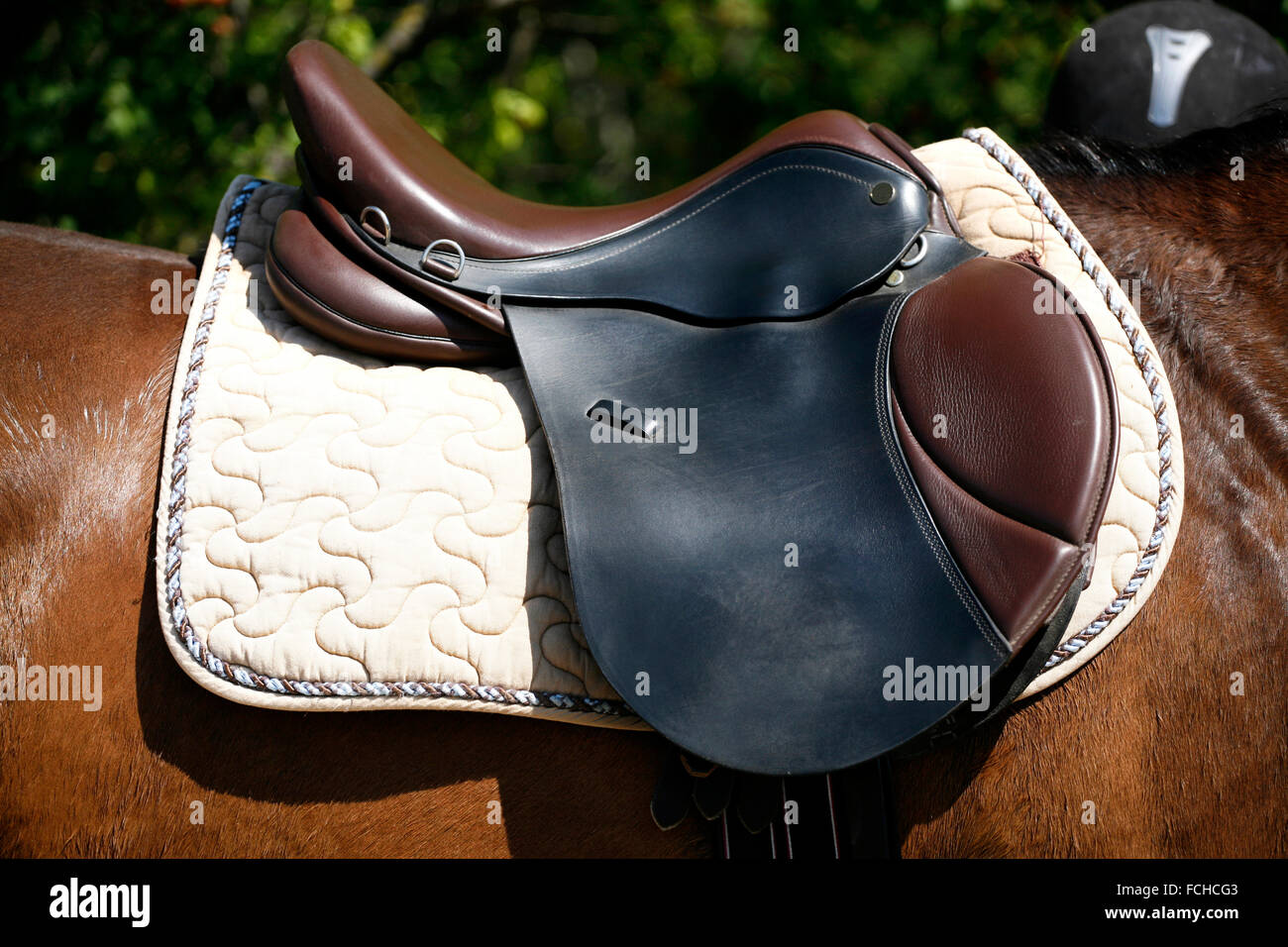 Black And Brown Leather Saddle On Back Of A Horse Stock Photo Alamy