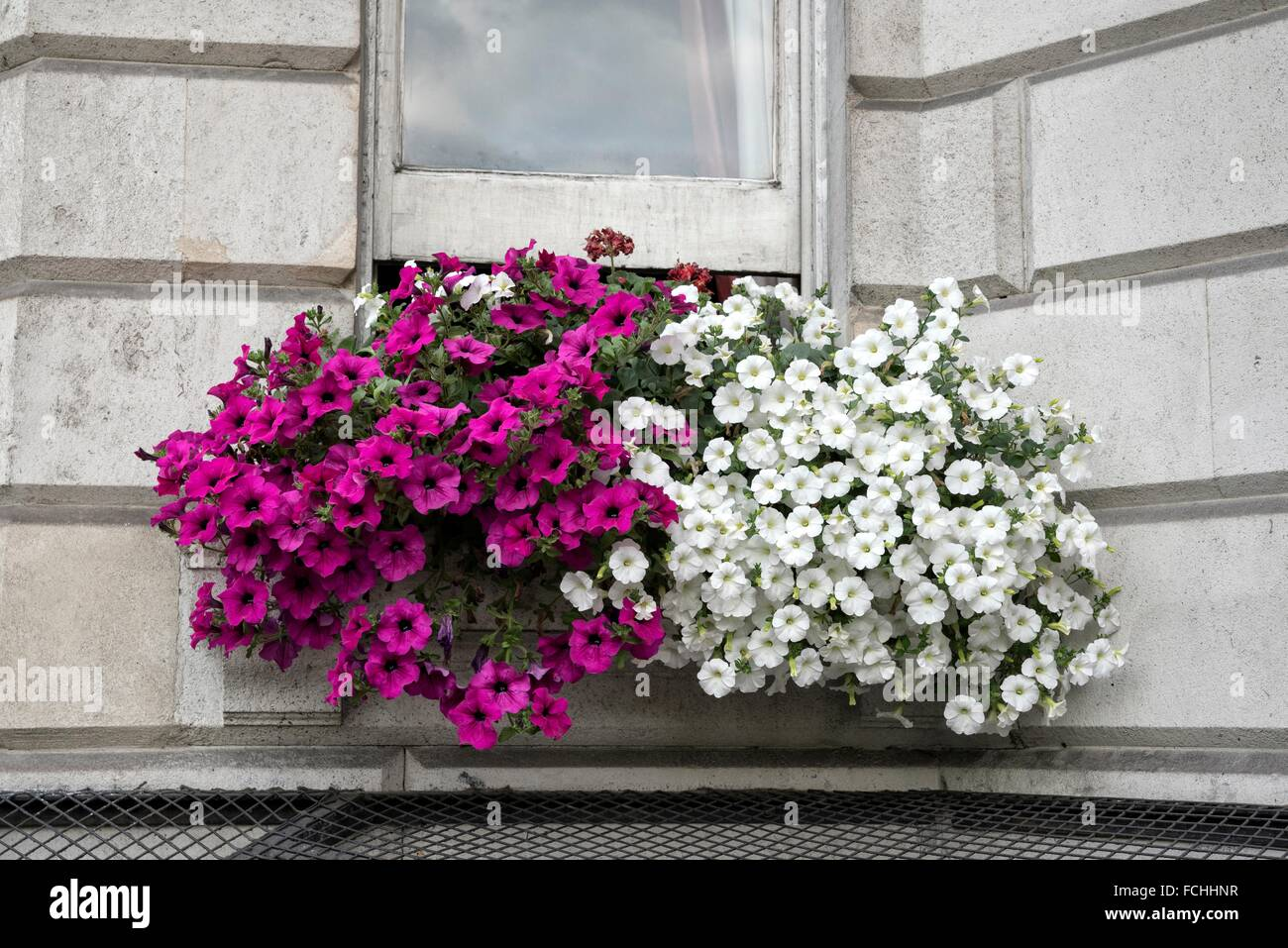 Beautiful Flower Box on a Piccadilly Residential Building, London, England. - Stock Image