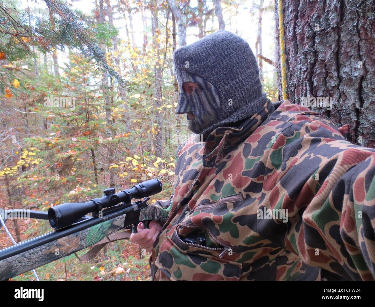 A deer hunter dressed in camo clothing hunting from a tree stand in a forest. - Stock Image