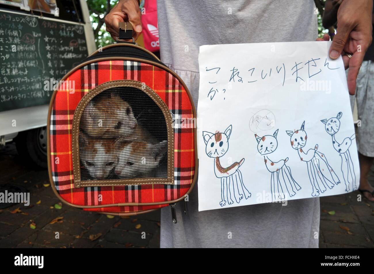 Naha, Okinawa, Japan: stray cats available for adoption - Stock Image