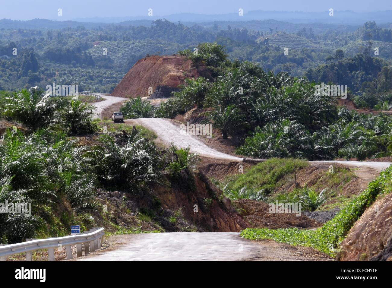 miri marudibaram oil palm estate road sarawak malaysia FCHYTF - what do you know about palm