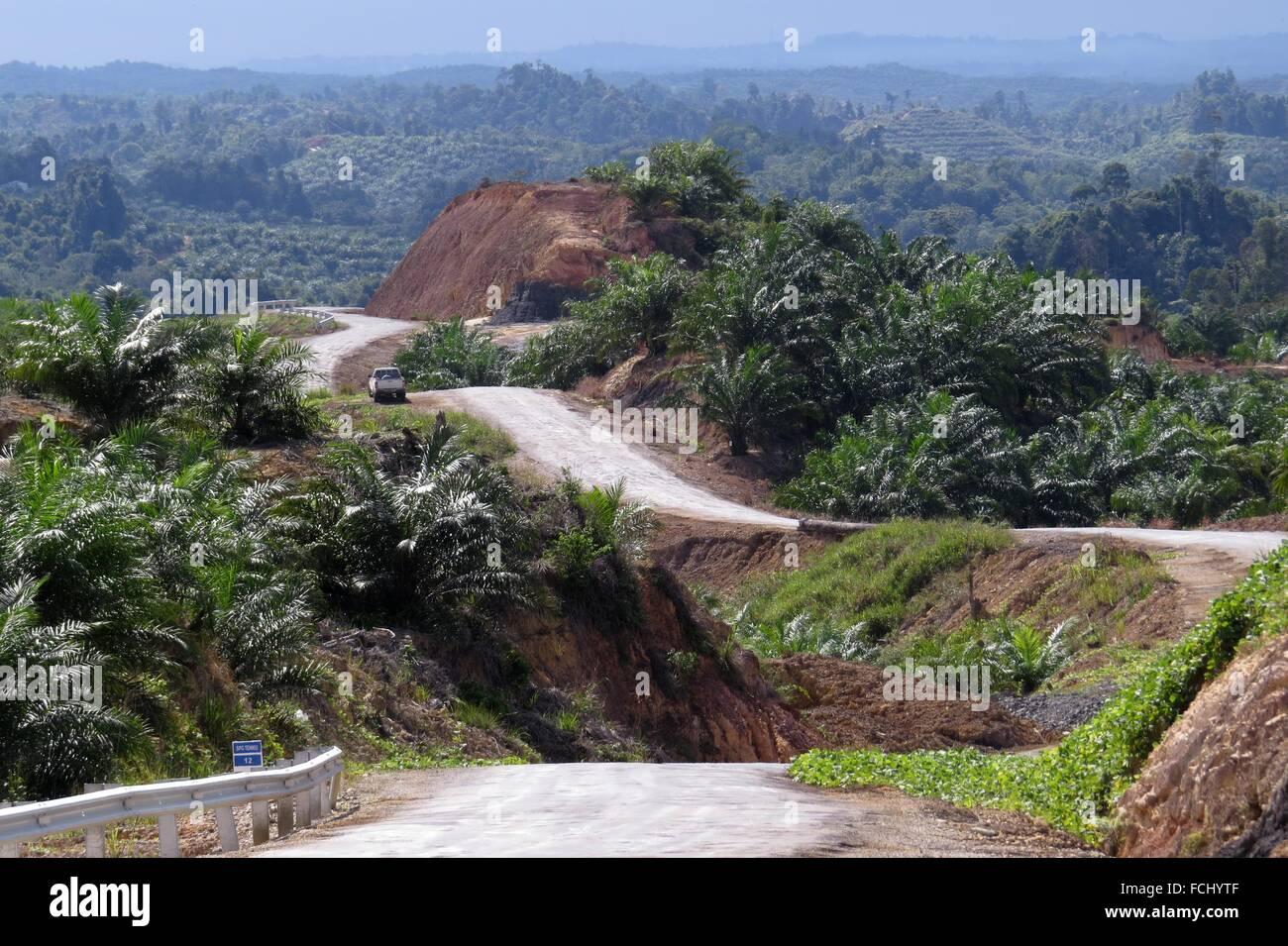 miri marudibaram oil palm estate road sarawak malaysia FCHYTF - What do you know about Palm