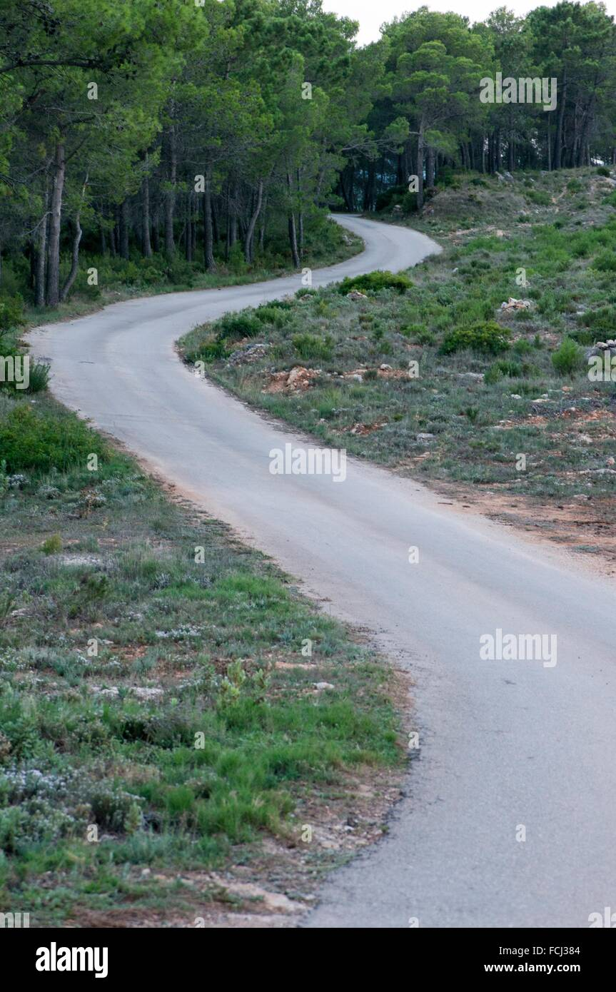 Winding road between pines shows the end of the road - Stock Image
