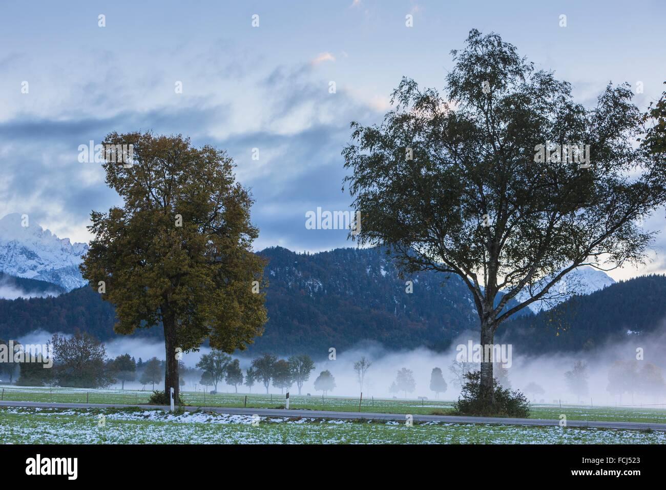 Trees and wintery landscape at dusk, Bavaria, Germany, Europe - Stock Image