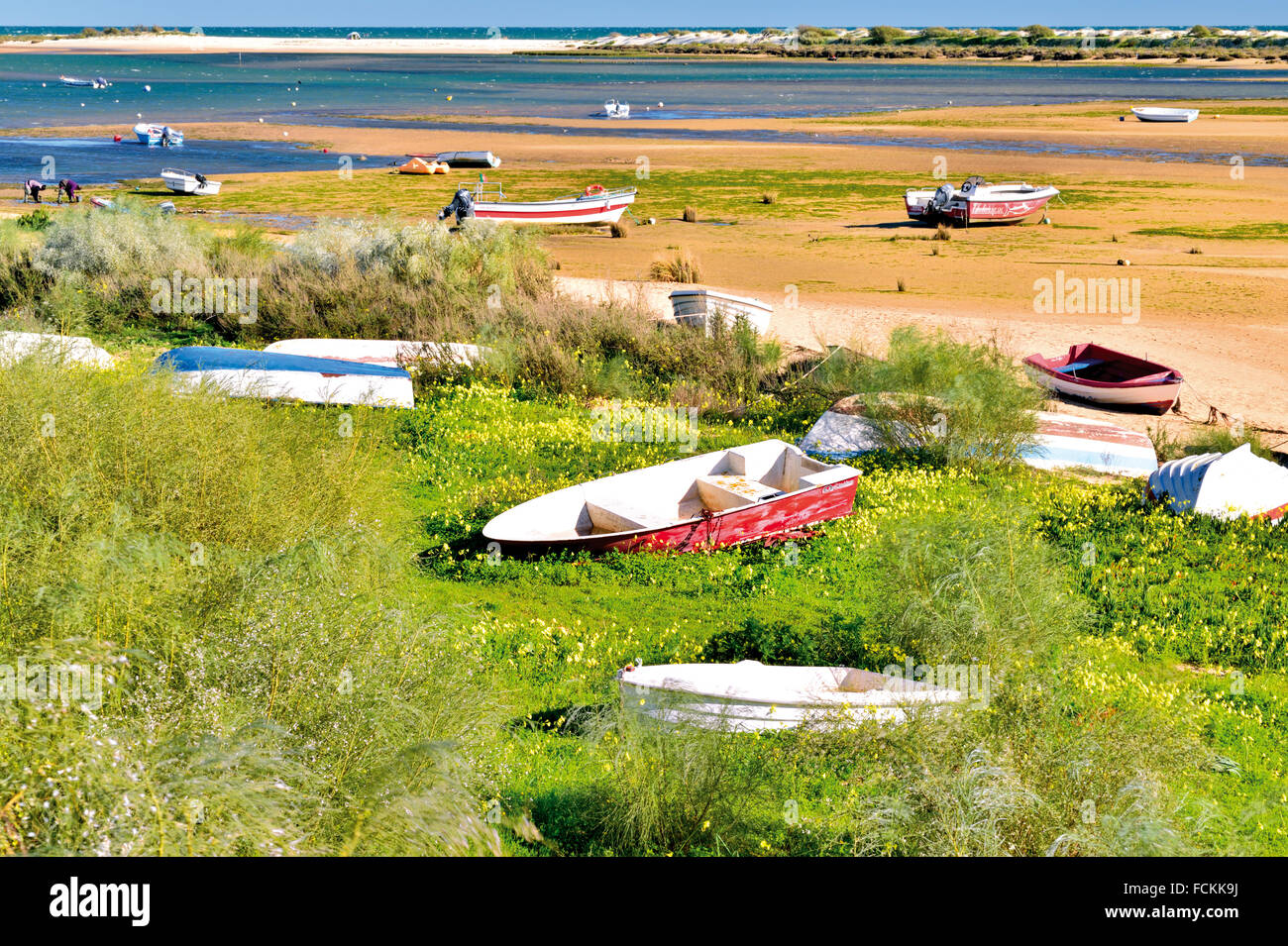 Portugal, Algarve:  Colorful fishing boats lying in the sandbanks of Ria Formosa at low tide - Stock Image