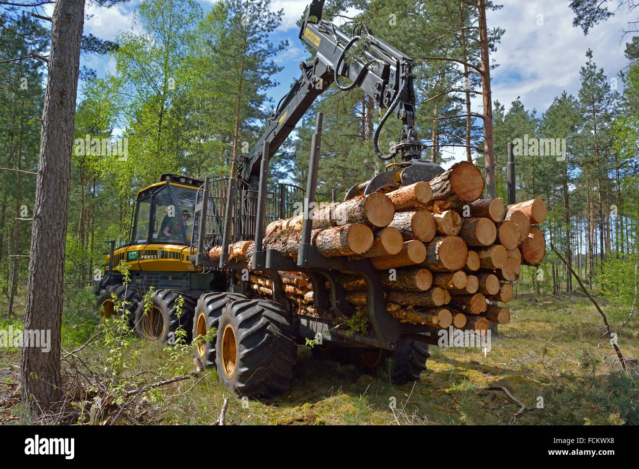 Charging a Forwarder. Wood Harvest after a Storm, Gifhorn, Lower Saxony, Germany. Stock Photo