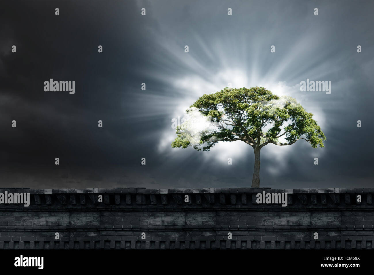 Green Tree As A Symbol Of Environmental Protection Stock Photo