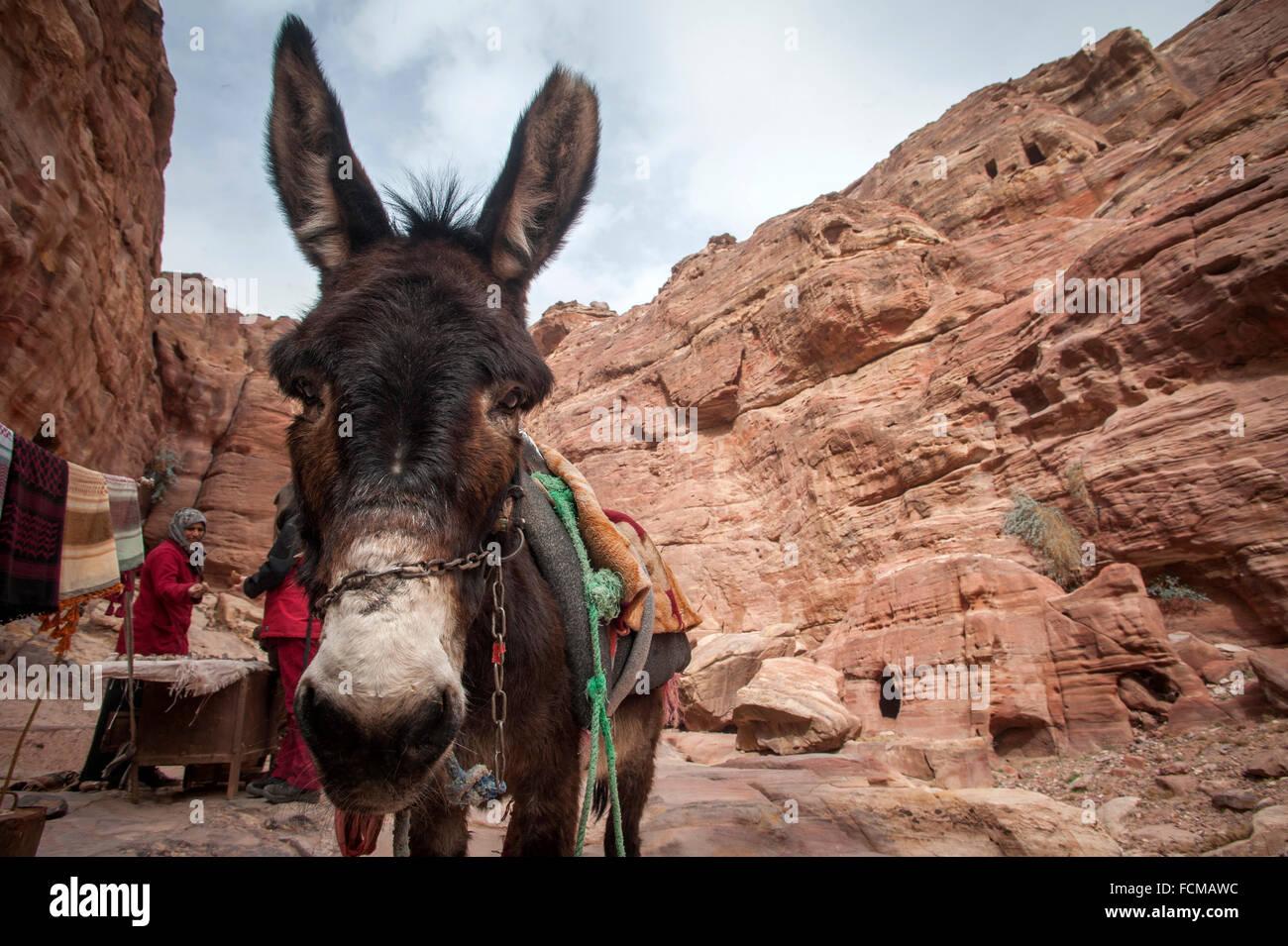 A donkey awaits tourists at Petra, Jordan. - Stock Image