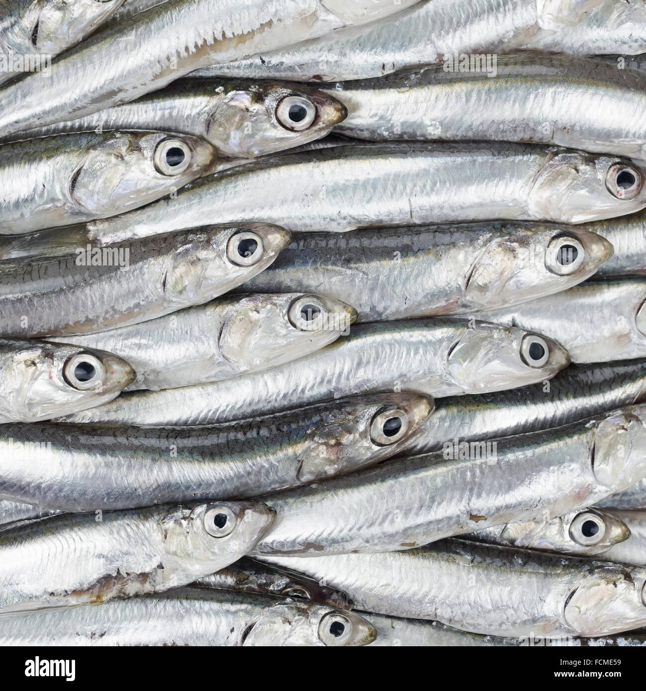 Fresh anchovies prepared seafood background texture or pattern. Raw food. - Stock Image