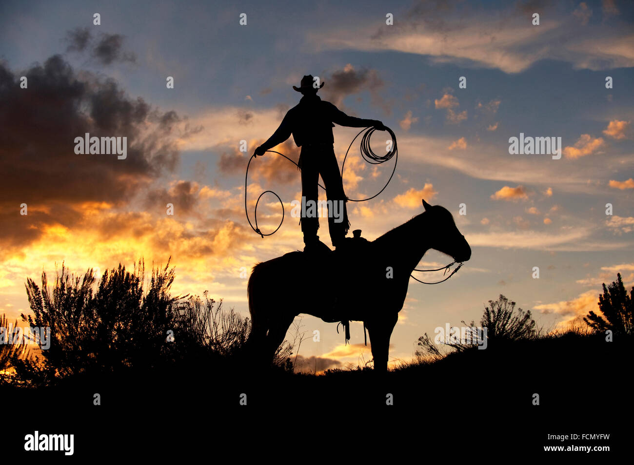 Cowboy Standing on Horse With Rope at Sunset - Stock Image