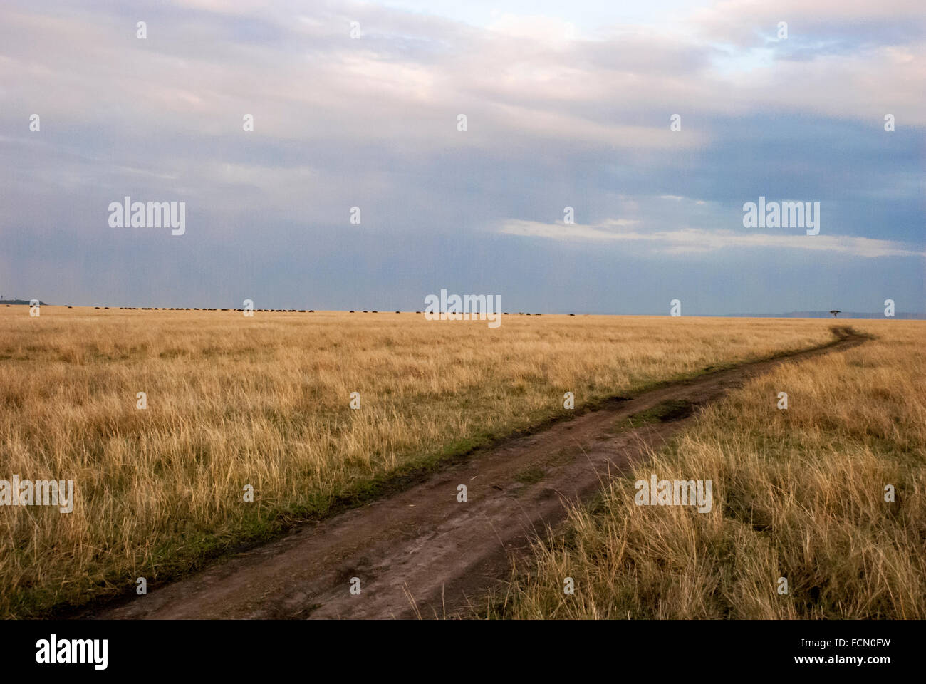 Dirt road under a cloudy sky through the yellow grass in the Masai Mara National Reserve, Kenya, East Africa Stock Photo