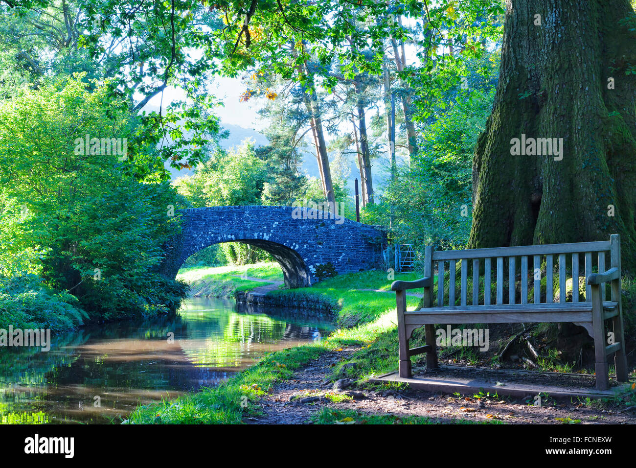 Wooden bench by an old oak tree, canal towpath and stone bridge on a forest edge, with sunshine glimmering through - Stock Image