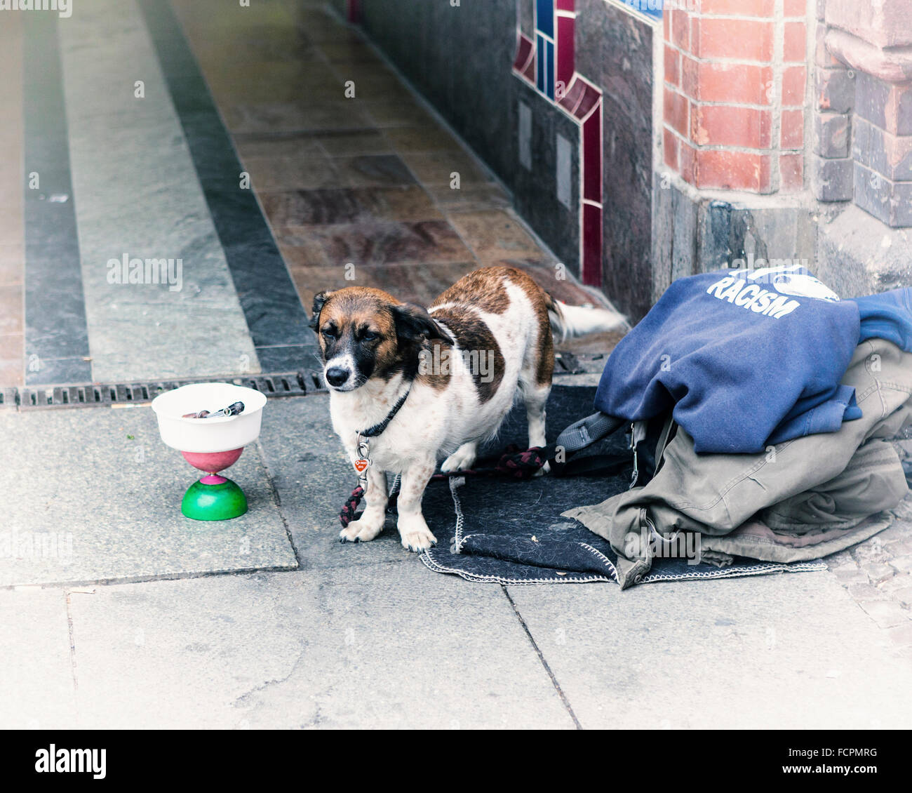 Dog with a moral, anti-racism pet - Stock Image