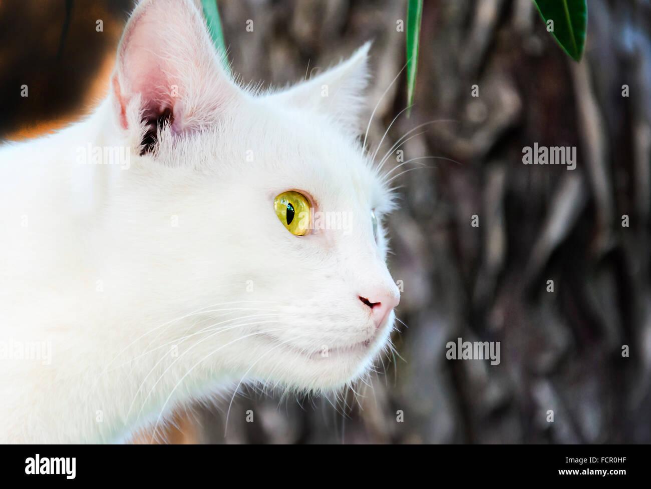 White Cat - Stock Image