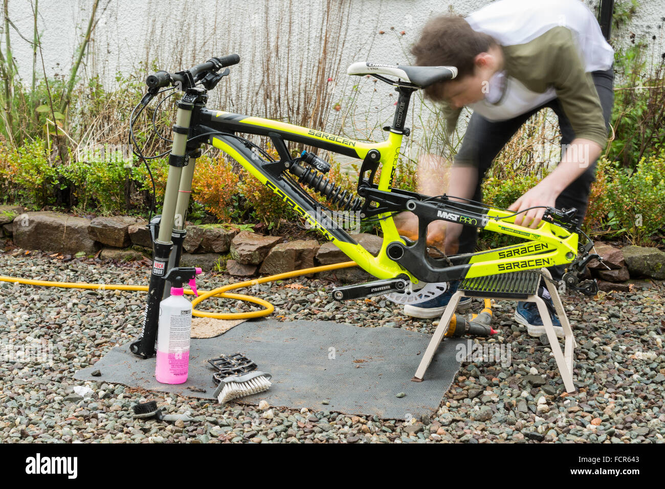 Teenager cleaning and building downhill mountain bike - Stock Image