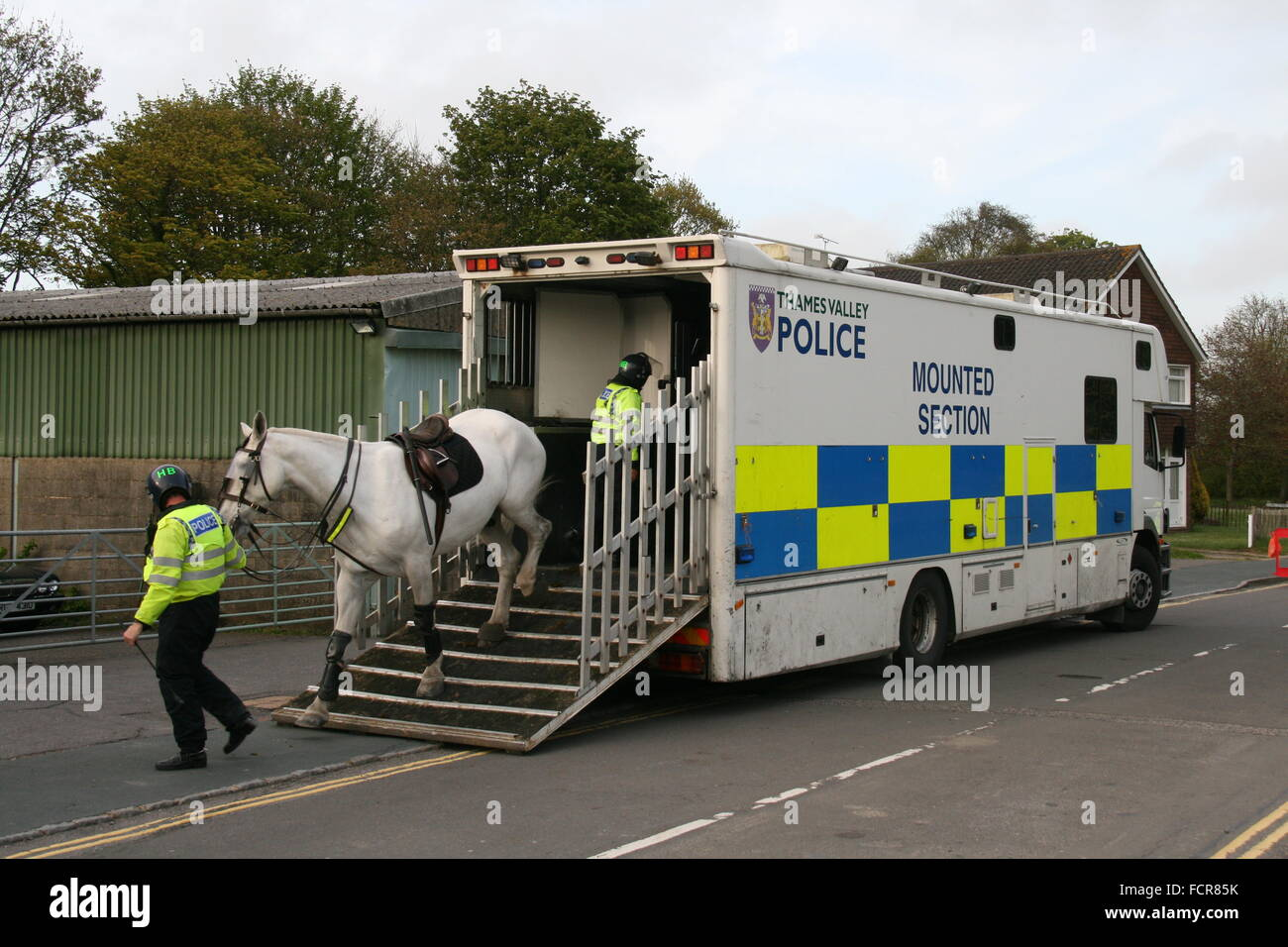 THAMES VALLEY POLICE MOUNTED SECTION HORSE BOX TRUCK WITH HORSE BEING TAKEN OUT OF VEHICLE BY A POLICE OFFICER - Stock Image